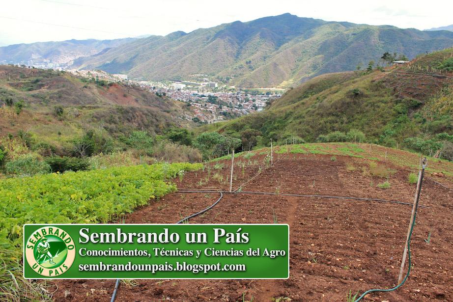 siembra en parroquía Antímano de Caracas