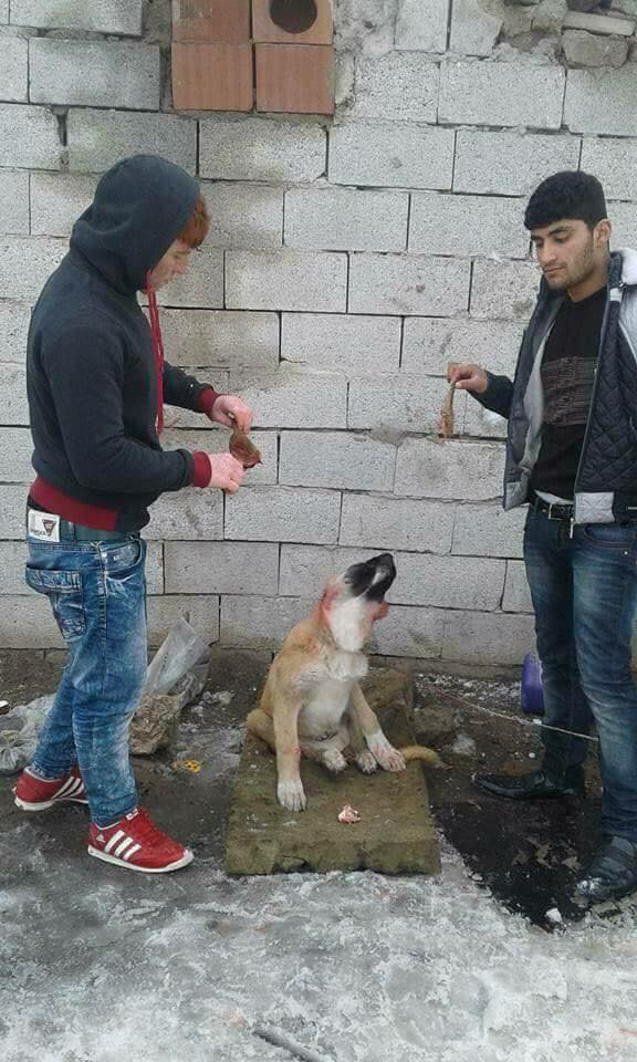 Netizens Are Furious Over These Two Guys Who Tortured a Poor Dog. WARNING: GRAPHIC CONTENT!