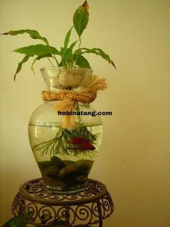 ikan hias Hewan Peliharaan Lucu di Rumah yang Mudah Dipelihara dan Murah