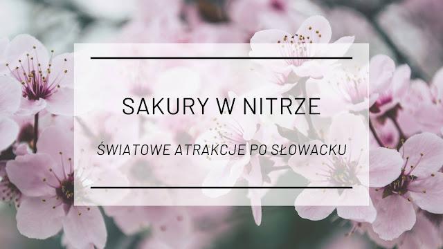 Sakury w Nitrze [Światowe atrakcje po słowacku]