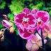 Cum știi că ar trebui schimbat ghiveciul orhideei tale