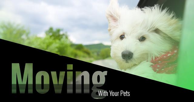 pets movers faridabad
