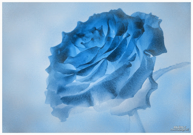 Dame, Rose