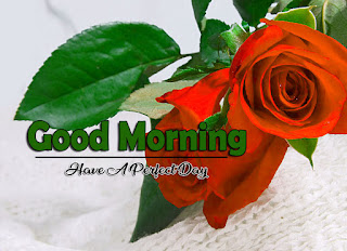 New Good Morning 4k Full HD Images Download For Daily%2B44