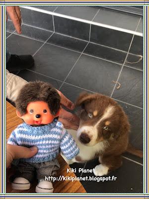 kiki monchhichi bebichhichi chiot chien berger australien mignon côte puppy