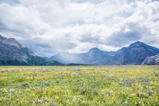 Flower Field - by Sharissa Johnson on Unsplash