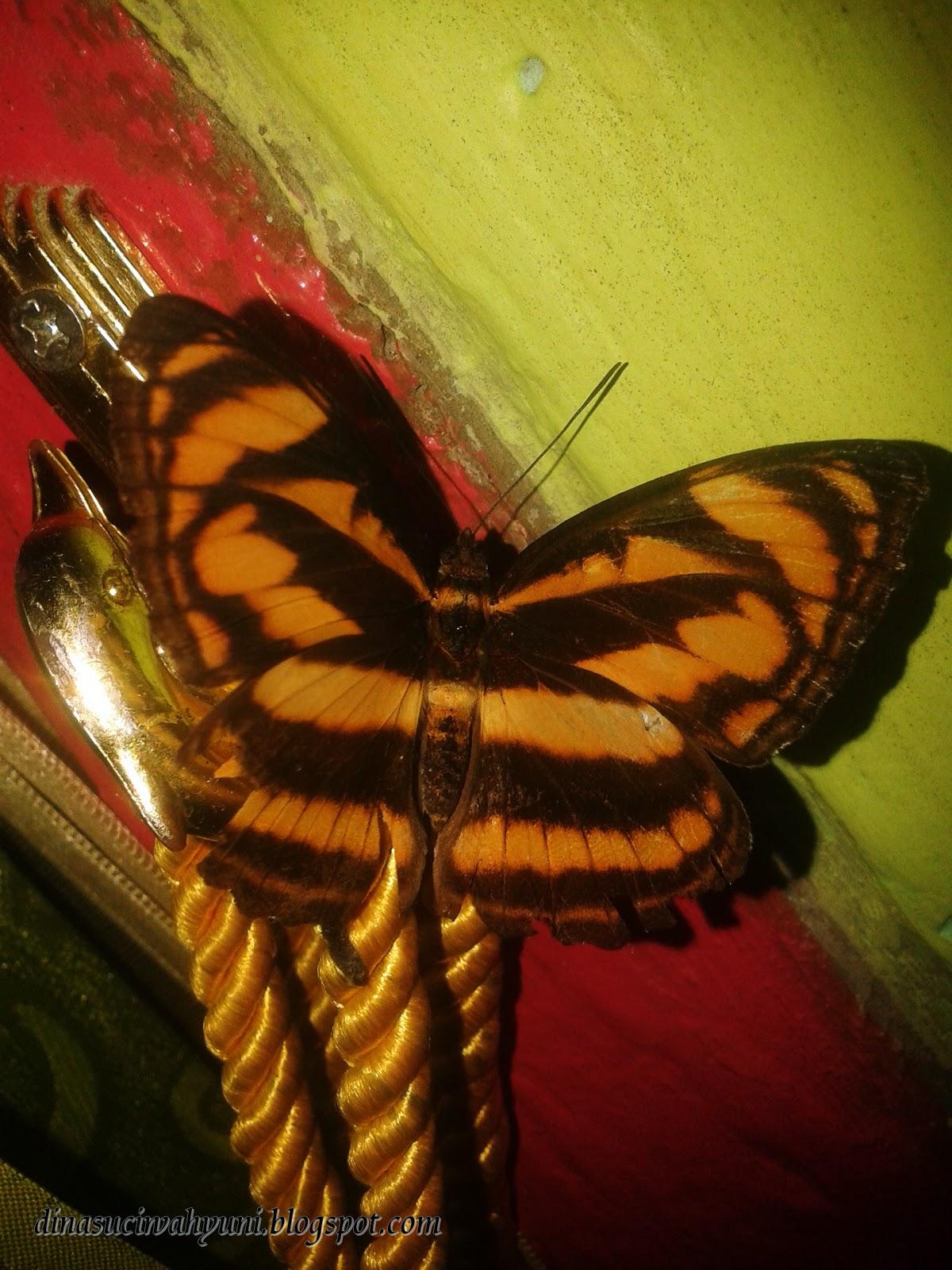 Kupu Kupu Cantik Motif Loreng Kuning Coklat Jdsk