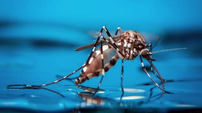 Toledo apresenta dados sobre a Dengue no município