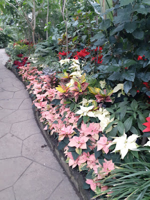 Allan Gardens Conservatory 2019 Winter Flower Show twenty by garden muses--not another Toronto gardening blog