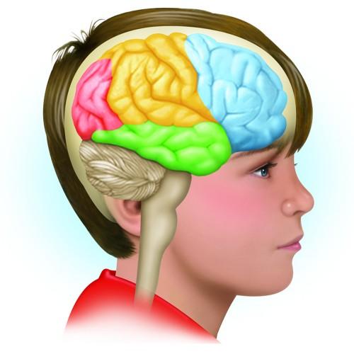 Beneficios para el cerebol con el omega 3