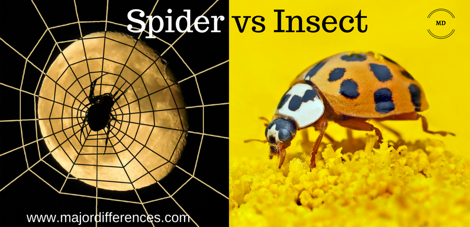 Difference between Spider and Insect (Spider vs Insect)
