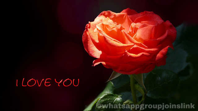 100+ I Love You: Images Photos Pictures and Wallpapers HD Free Download For Girlfriend Boyfriend Lover