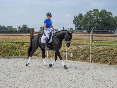 dressage horse, horse riding, equestrian, amanda renouard, flat work, schooling