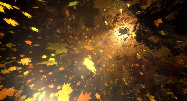 Sun & Leaves Wallpaper Engine