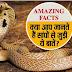 जानिए - दुनिया के 10 सबसे जहरीले सांपों की प्रजातिया