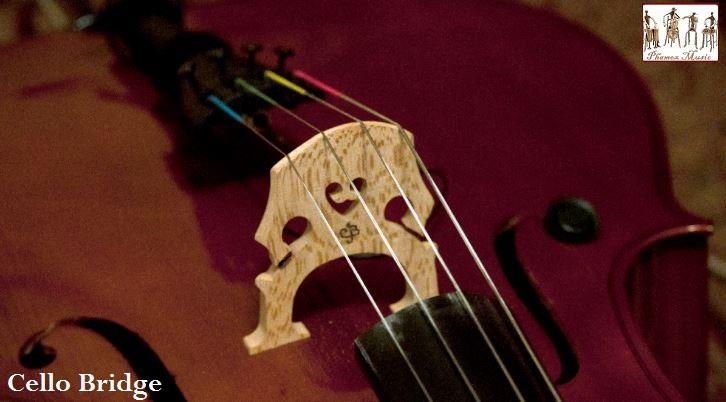 The Cello Anatomy ~ Phamox Music