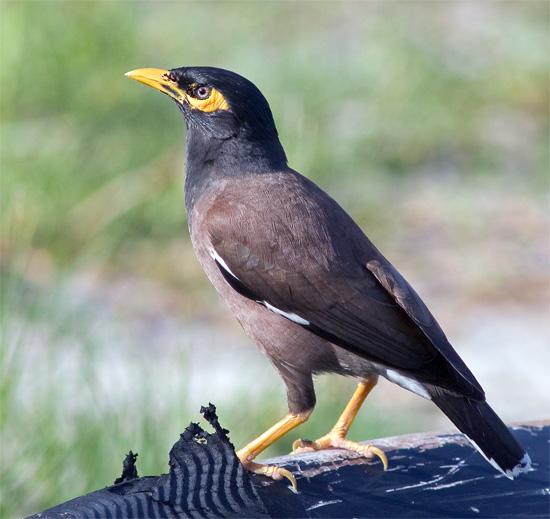 Birds Breeds Gallery - photo#1
