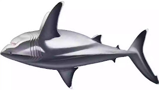 Megalodon disclosure Scientists uncover monster shark's surprising genuine scale