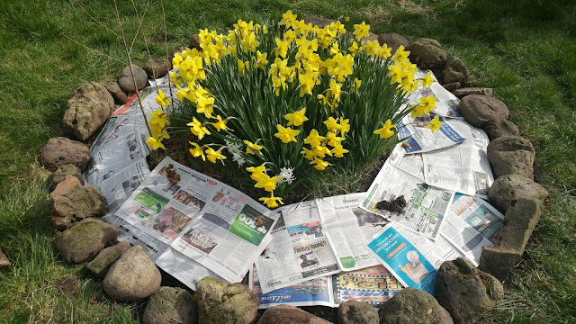 Newspaper to deter weeds