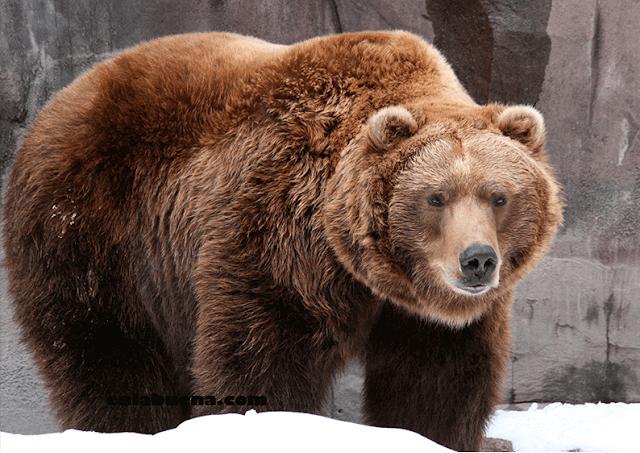 Interpretación de soñar con osos
