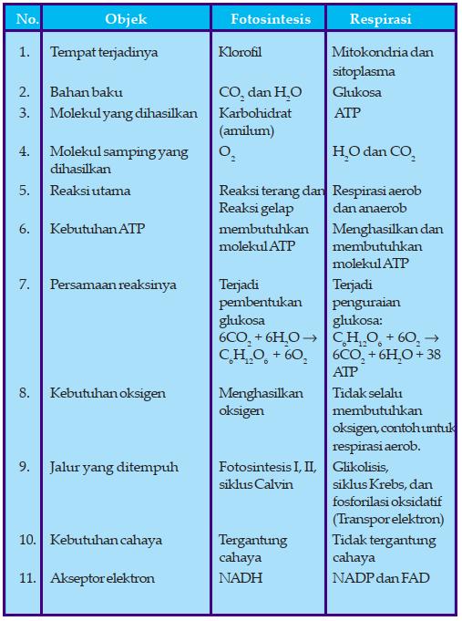 Tabel Perbedaan Fotosintesis dan Respirasi