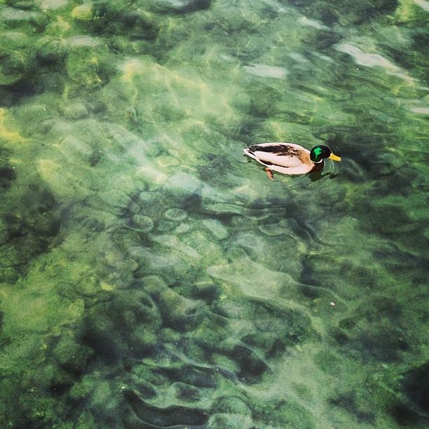 emerald green, lake, ducks