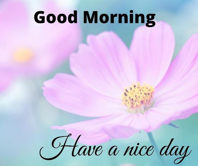 Eye Catchy Good Morning Flower Photo