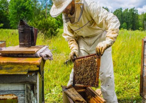 Με πολλά προνόμια για μελισσοκόμους η εγγραφή στο Ηλεκτρονικό Μελισσοκομικό Μητρώο