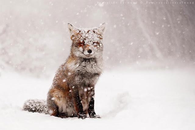 6 Spesies Rubah yang menawan yang Harus Anda Ketahui