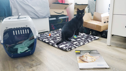 Black cat standing next to cat carrier and Cats Protection Welcome Pack