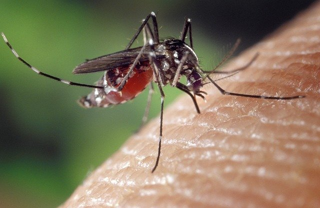 Gejala Penyakit Cikungunya Dan Pencegahannya