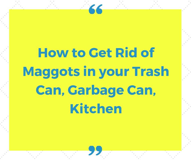 How to get rid of maggots?