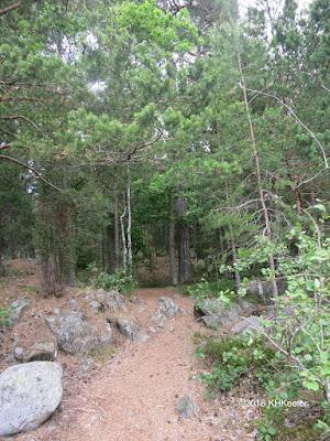 forest, Artipeleg, Sweden