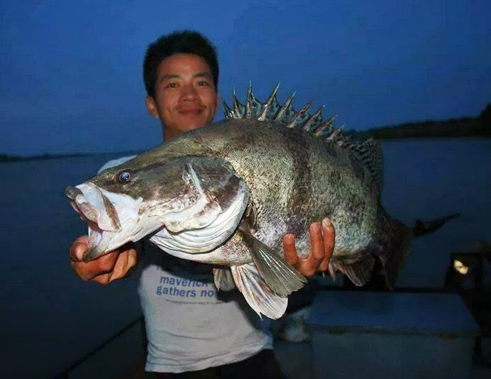 Big Fishes Of The World Perch Chinese Siniperca Chuatsi