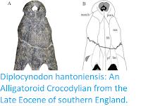 https://sciencythoughts.blogspot.com/2019/09/diplocynodon-hantoniensis-alligatoroid.html