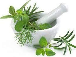 obat gatal tradisional ampuh yang diminum