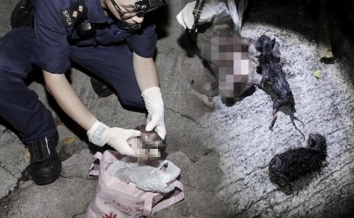 3 Anak Kucing Ditemukan Mati dengan Kaki Terikat Tali di Tempat Sampah, Polisi Buru Pelakunya