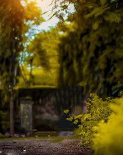 Green Yellow Nature Blur Background Free Stock