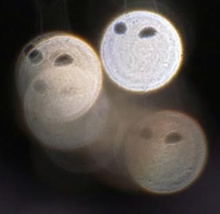 paranormal eye
