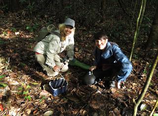 Cristalino Fungi Project