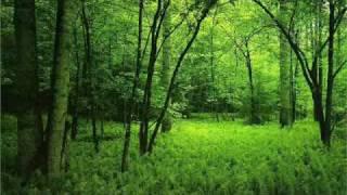 Perfect Harmony (videó)