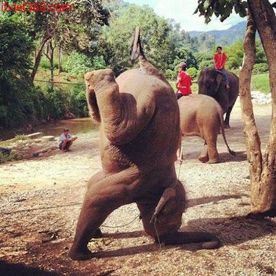 Những hình ảnh hài hước vui nhộn nhất, hiphop tê giác