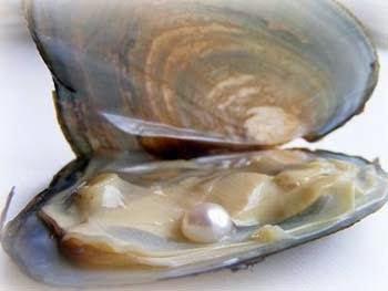 Uma ostra que não foi ferida não produz pérola