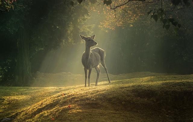 畏れを感じる。日本的な暗さのある写真【a】 写真家のScottSim 明るさ
