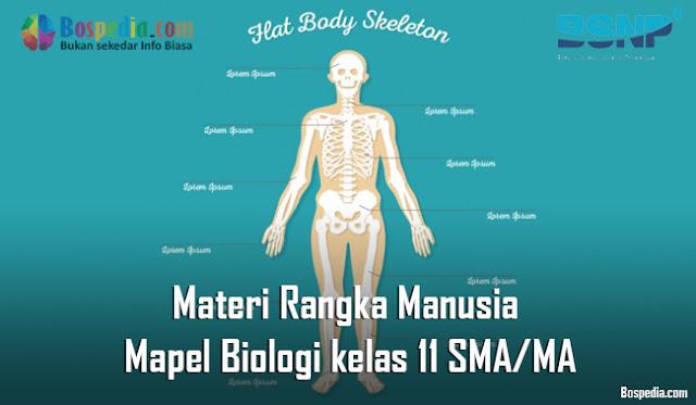 Materi Rangka Manusia Mapel Biologi kelas 11 SMA/MA