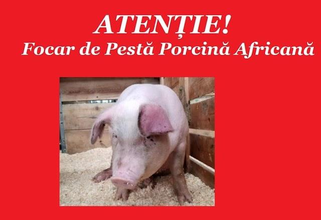 În comuna Hănăsenii Noi s-a confirmat un focar de Pestă Porcină Africană