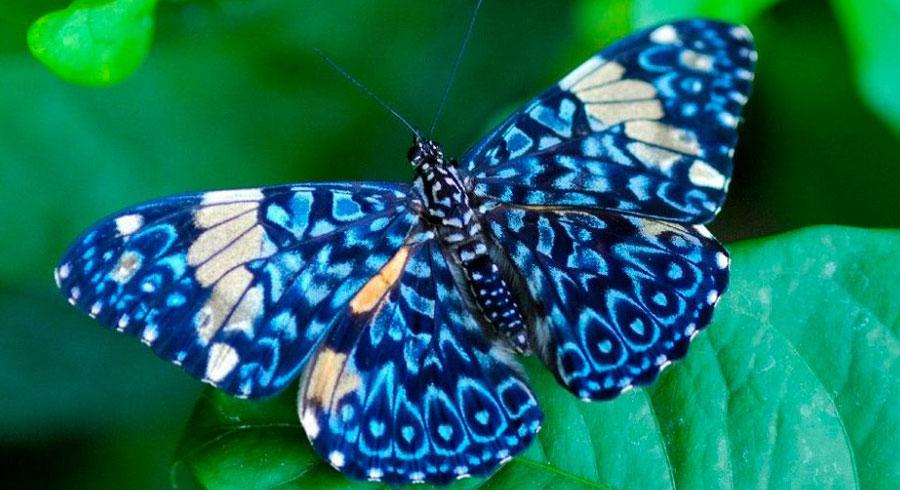 Test: Elige tu Mariposa y descubre lo que tiene para ti