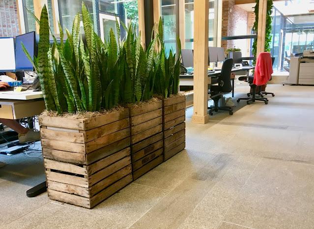planten huren met bloemen en onderhoud voor event kantoor