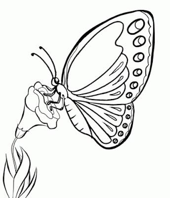 Mewarnai gambar kupu kupu mudah