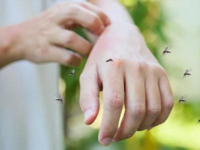 Medidas de prevención contra el dengue [Infografía]